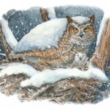 "View ""Owl Nesting"""
