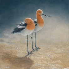 "View ""Lovers' Beach - American Avocet"""